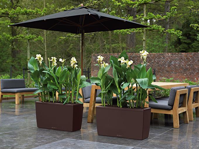 sichtschutz im pflanzk bel jetzt ist pflanzzeit f r geh lze. Black Bedroom Furniture Sets. Home Design Ideas