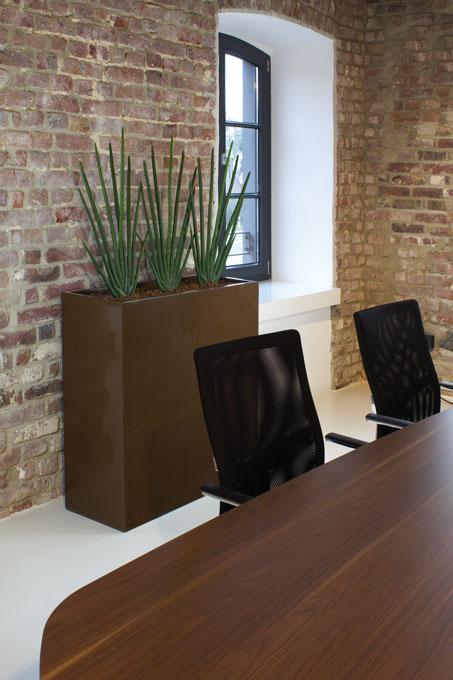 zimmerpflanzen in der gastronomie kurbeln den umsatz hoch. Black Bedroom Furniture Sets. Home Design Ideas