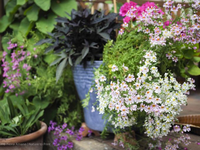 die richtige auswahl an pflanzen ist entscheidend das. Black Bedroom Furniture Sets. Home Design Ideas