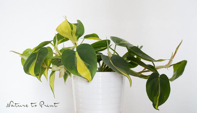 Zimmerpflanzen in der gastronomie kurbeln den umsatz hoch for Ausgefallene zimmerpflanzen