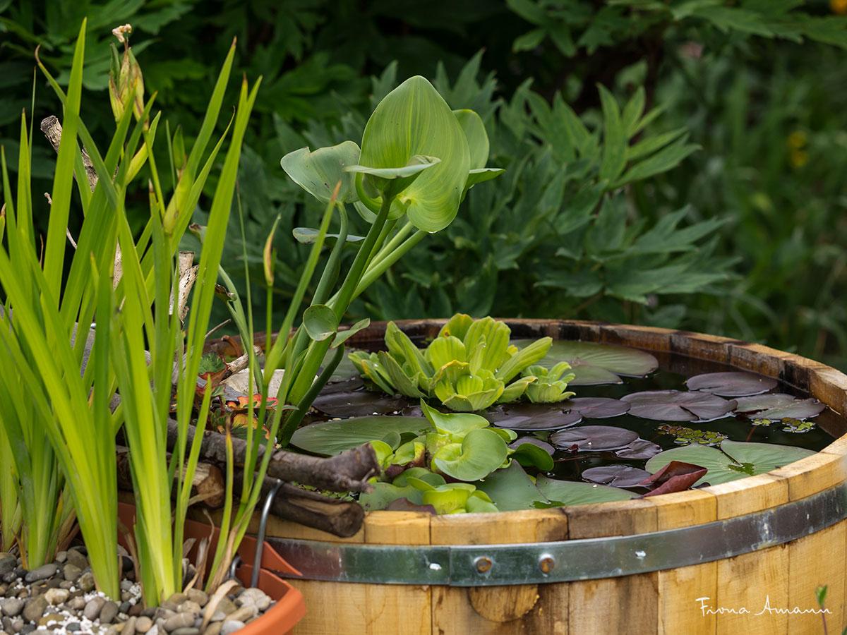 Beliebt Bevorzugt So überwintern Sie Ihren Miniteich im Holzfass | Pflanzkübel-Blog &IR_79