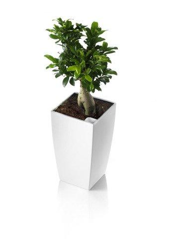Blumenkübel weiß für verschiedenartige Pflanzen hervorragend ...